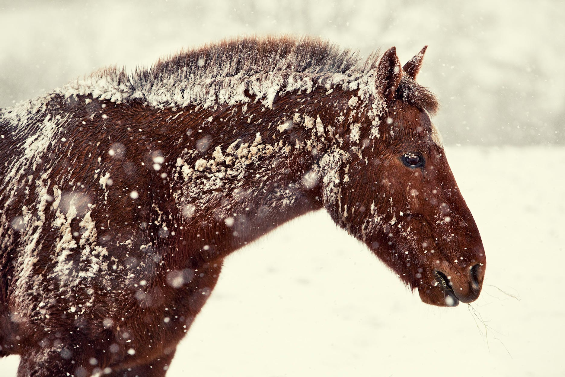 CB_POLO-HEAD-IN-SNOW-copy