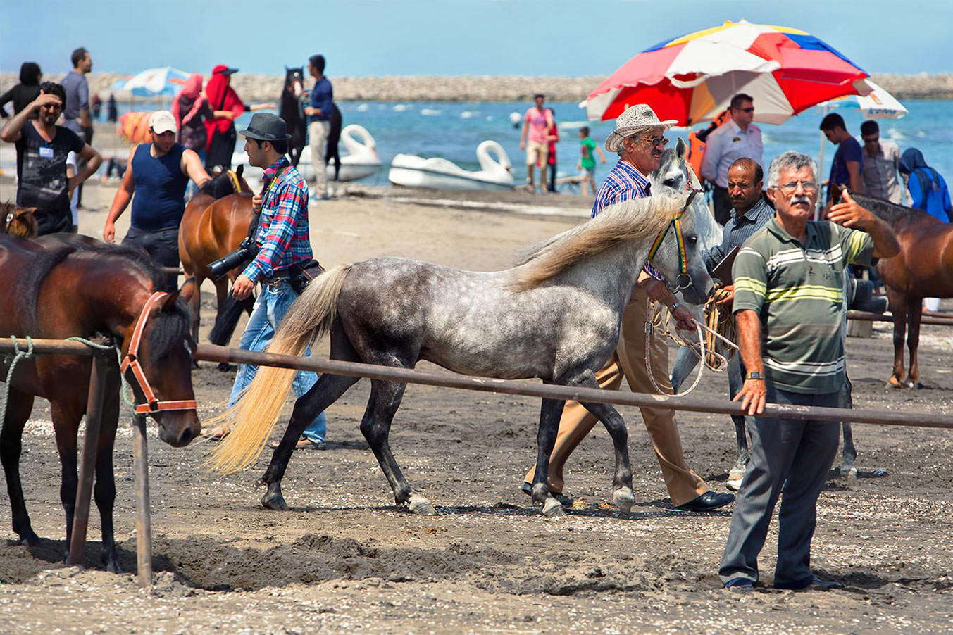 Caspian-Stallion-on-beach-at-Rasht
