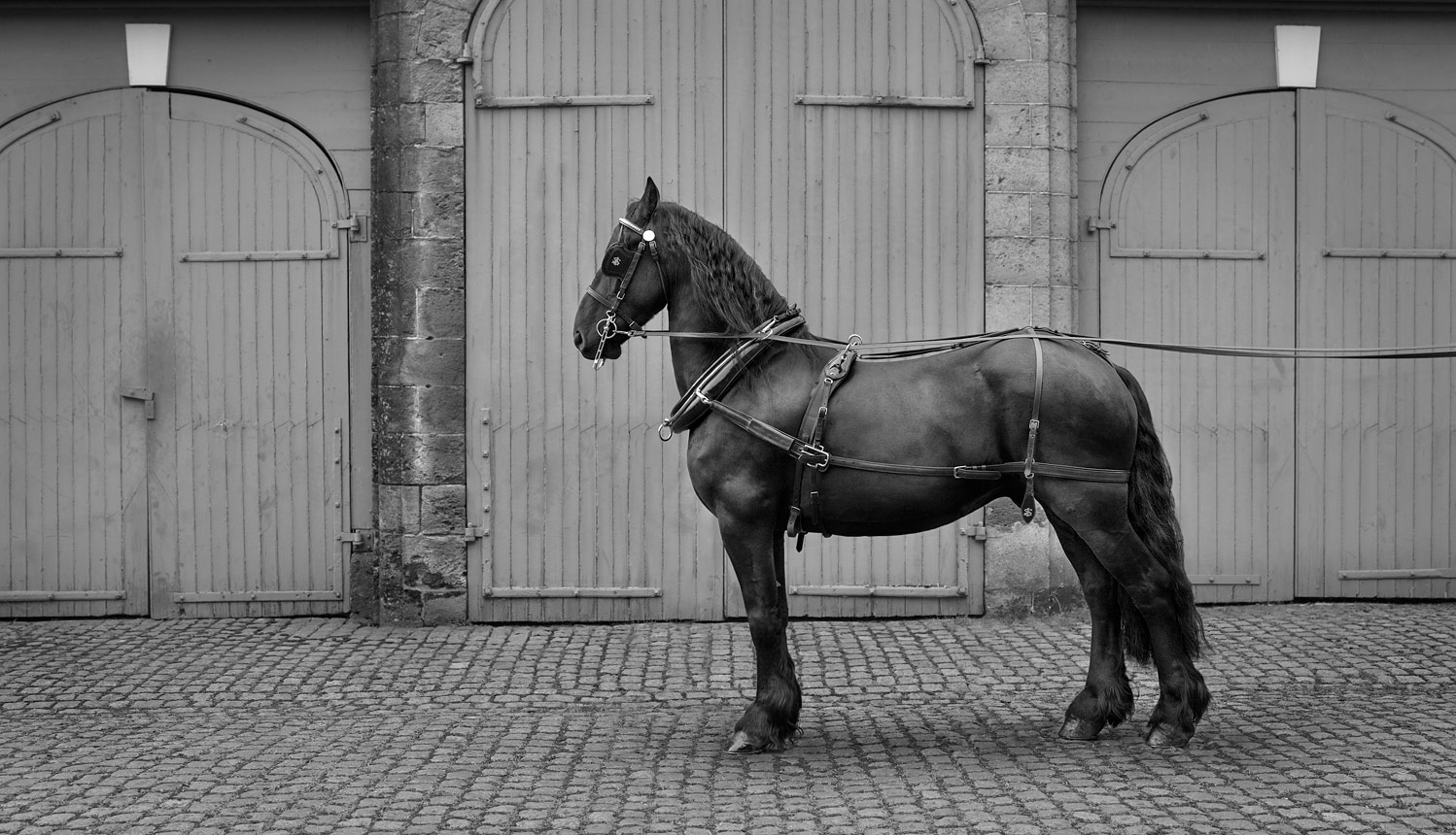 FRIESIAN-HORSE-AT-PETWORTH-HOUSE