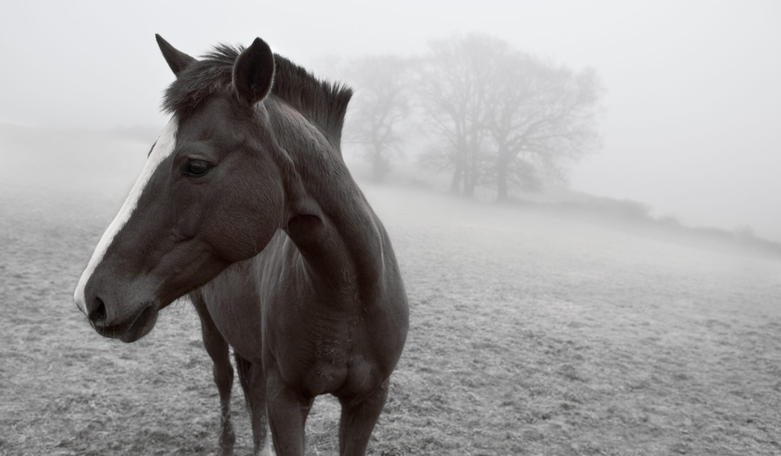 Horse-in-the-mist-Shimmings Valley