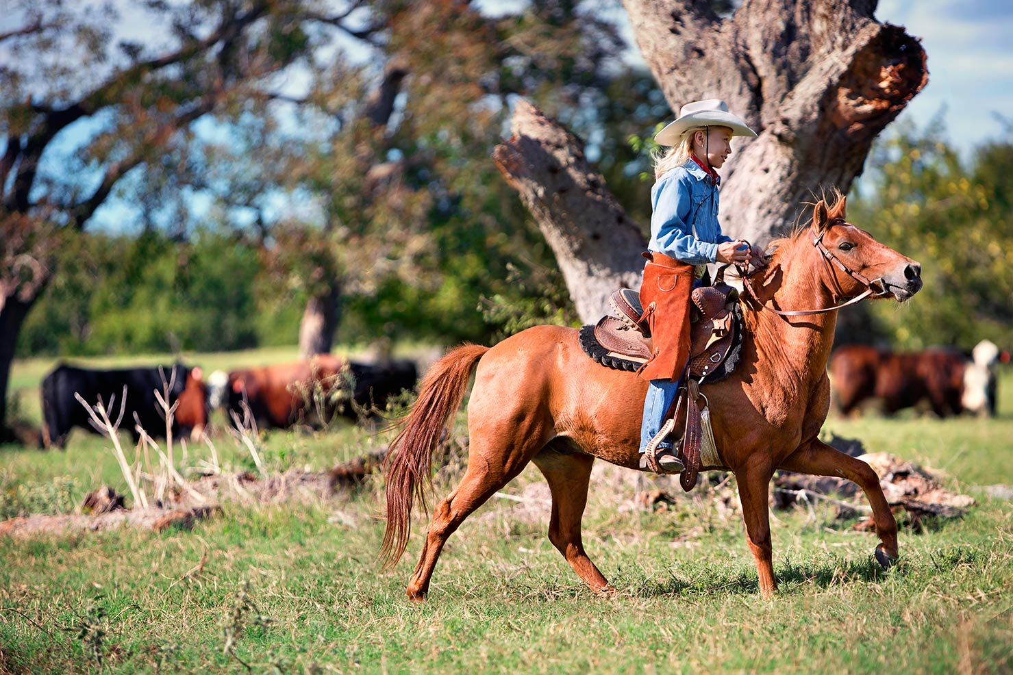 Texan-Girl-Riding-Amongst-Cattle-FLAT
