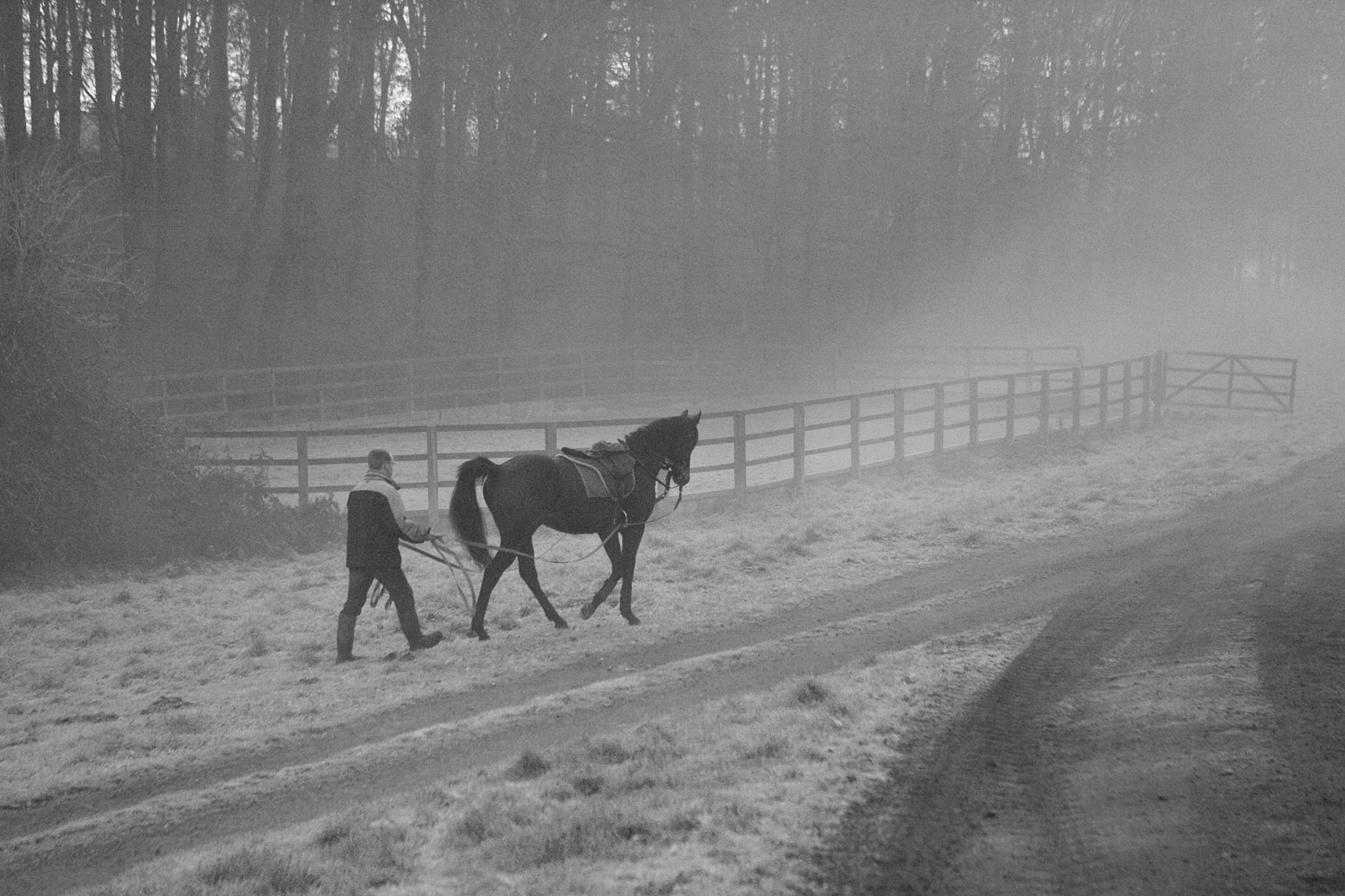 Yearling-being-lead-trained-in-early-fog